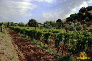 Agriturismo Serratone Guesthouse Tuscany Italy View 10