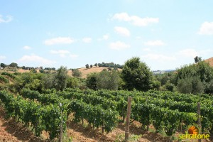 Agriturismo Serratone Guesthouse Tuscany Italy View 16