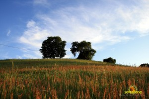 Agriturismo Serratone Guesthouse Tuscany Italy View 18