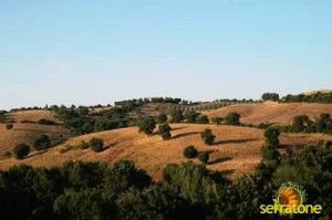 Agriturismo Serratone Guesthouse Tuscany Italy View 33